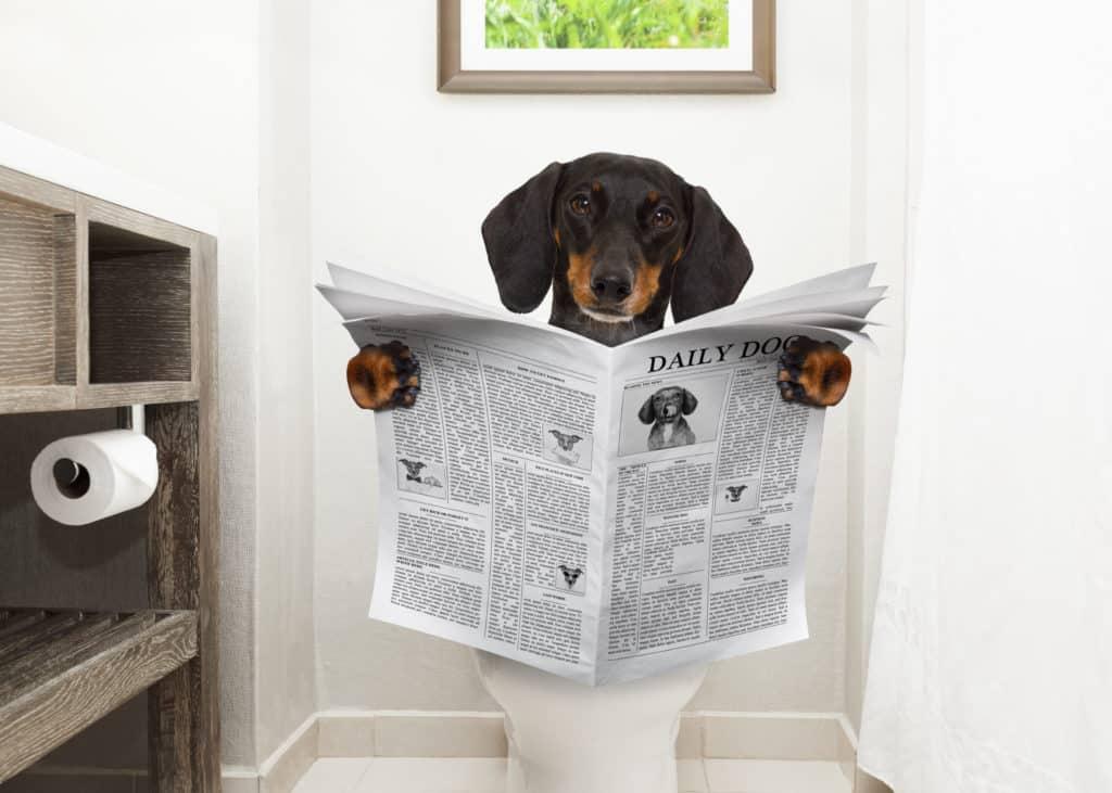 comment rendre un chien propre