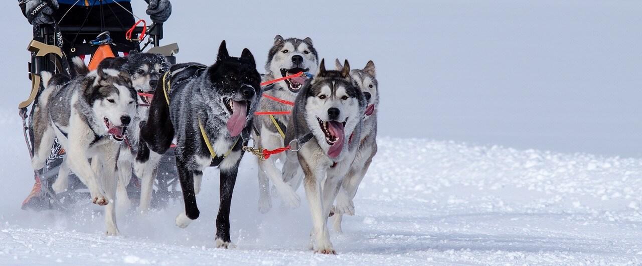 sport-canin